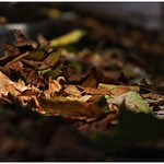 Just a pile of leaves.