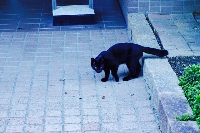 Today's Cat@2017-10-09