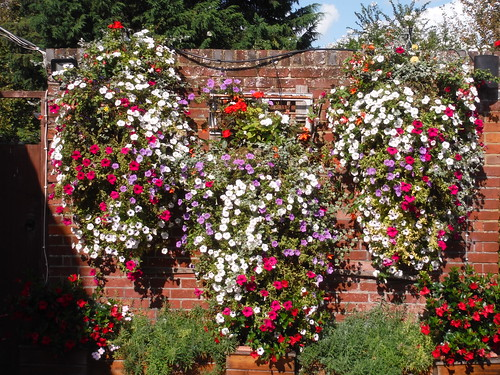 Flowerpots, The Plough Inn, Lewson Street