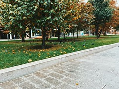 Tree Autumn Leaf Outdoors Nature Day Change Beauty In Nature Grass Tranquility Park - Man Made Space Growth No People Green Color Tranquil Scene Scenics at Arbat Street (Арбат)