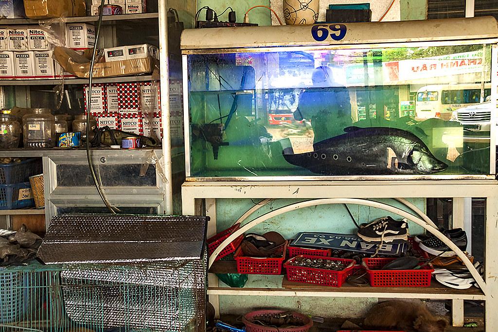 Fish in garage--Ea Kar