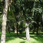 Mombasa, Uhuru Gardens , NGID1725499070