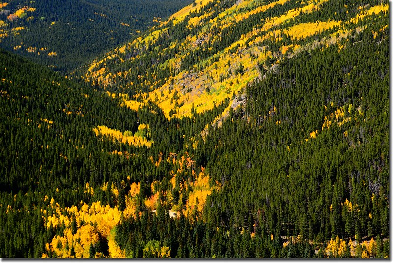 Fall colors, Mount Evans Scenic Byway, Colorado (34)
