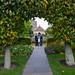 Botanic Gardens Edinburgh Oct 2017 -69