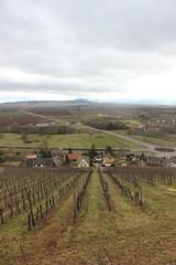 2015-03-01-15-18-19_Les Forts Trotters_à Marlenheim