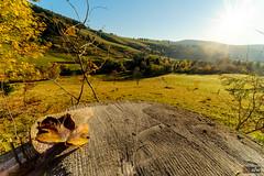 Herbstbeginn im Schwarzwald