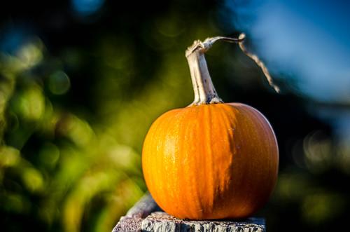 Samish Pumpkin-001