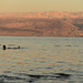 View of the Dead Sea by Mevout