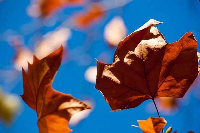Fall focus. Caravac de la Cruz
