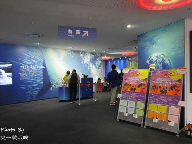 海遊館058