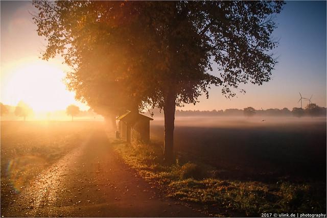 _morning