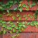 The Garden Wall by Todd Evans