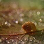 teeny tiny shell...