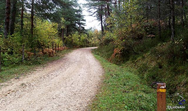 Ruta de los Castaños Centenarios en la Metrópoli Verde 8