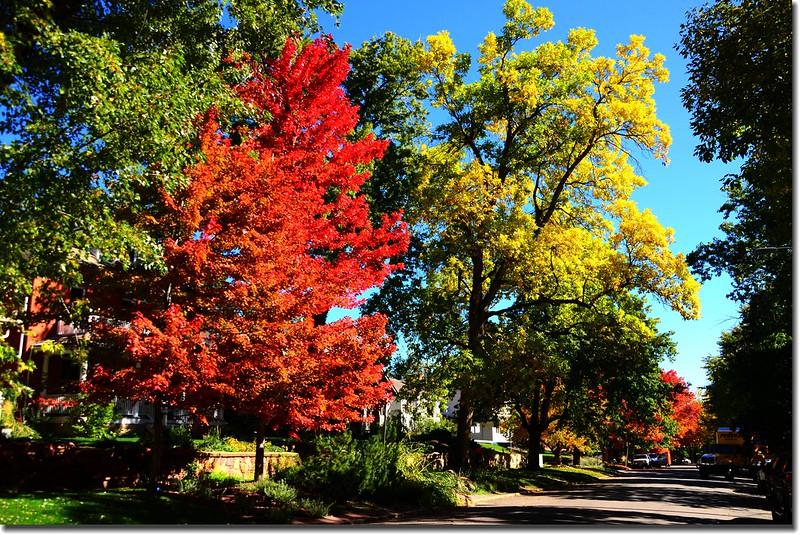 2017 Maple in Fall, Boulder, Colorado  (19)