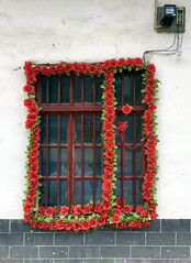 Window opf Plastic Roses