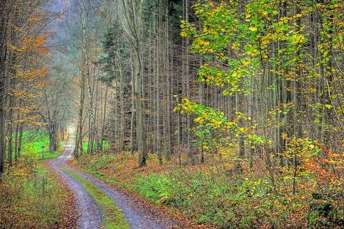 Herbstwald 🍃🍁🍂
