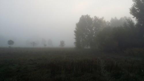 #tommw 50F overcast. Calm. Fog