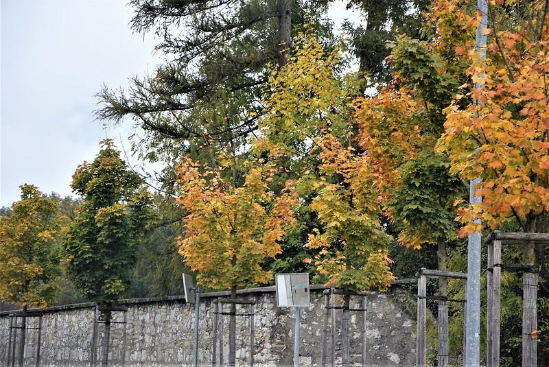 Autumn 09.10 (3)