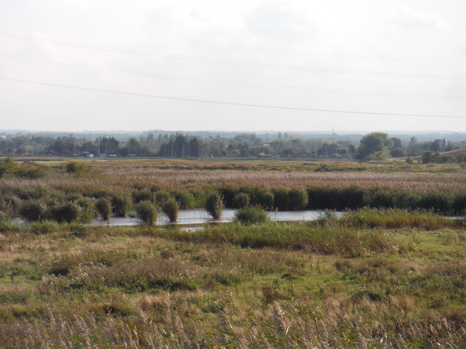 Birds in East Flood, Oare Marshes Nature Reserve SWC Walk 299 - Teynham to Faversham
