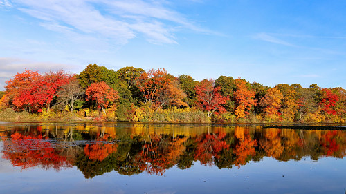 autumn massapequa massapequapreserve longisland newyork fall fallcolors fallfoliage reflection rpg90901 tree sky pond water morning outdoor landscape canon 6d canonef24105mmf4lisusm 2015 october 0845 foliage light color