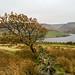 <p><a href=&quot;http://www.flickr.com/people/21913923@N03/&quot;>Craig Hannah</a> posted a photo:</p>&#xA;&#xA;<p><a href=&quot;http://www.flickr.com/photos/21913923@N03/37069643403/&quot; title=&quot;Autumn Oak Tree - Dove Stones&quot;><img src=&quot;http://farm5.staticflickr.com/4491/37069643403_72139ffaac_m.jpg&quot; width=&quot;240&quot; height=&quot;160&quot; alt=&quot;Autumn Oak Tree - Dove Stones&quot; /></a></p>&#xA;&#xA;