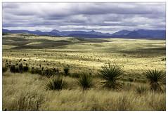 Marfa Grasslands