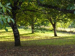 Under the walnut trees - Photo of Ligueux