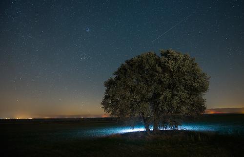 arboles nocturnos 37459337350_13598289cb