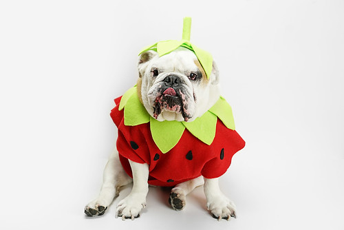 Strawberry costume and hat for dogs