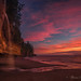 Weeping Mystic - Vancouver Island, Canada by Thomas J Dawson
