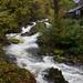 Rydal Beck Waterfall  6