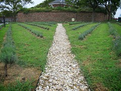 Lavender Field Project