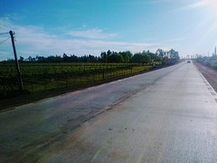 Al costado del camino