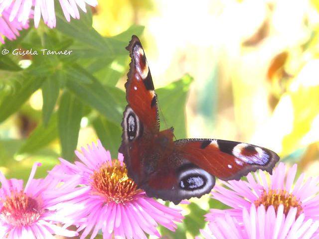 Mein Herbstgarten