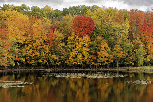 autumn color fall leaves lincoln ri rhodeisalnd cumberland pond