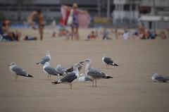 Bird Beach Sand Animal Wildlife Flying Outdoors Day Nature People Adult