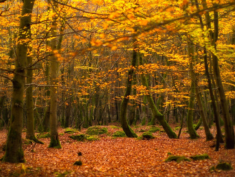 The ancient woodland of The New Forest National Park in autumn colours. Credit Tommy Clark, flickr