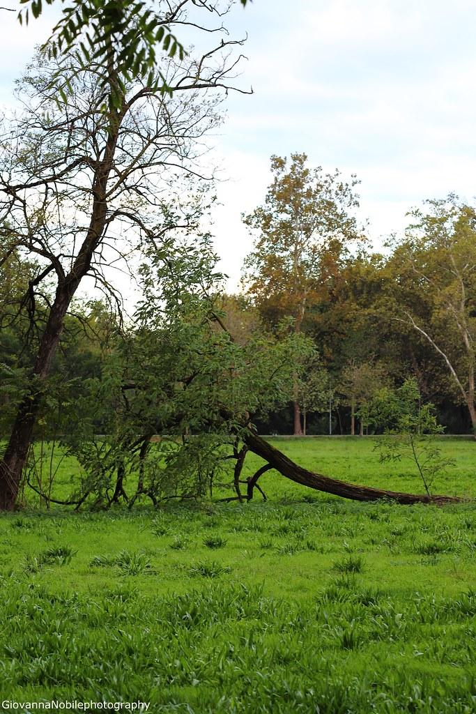 Al limitar del bosco 3