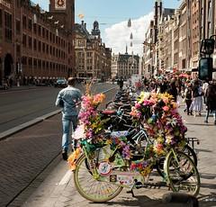 The Fairy Bikes