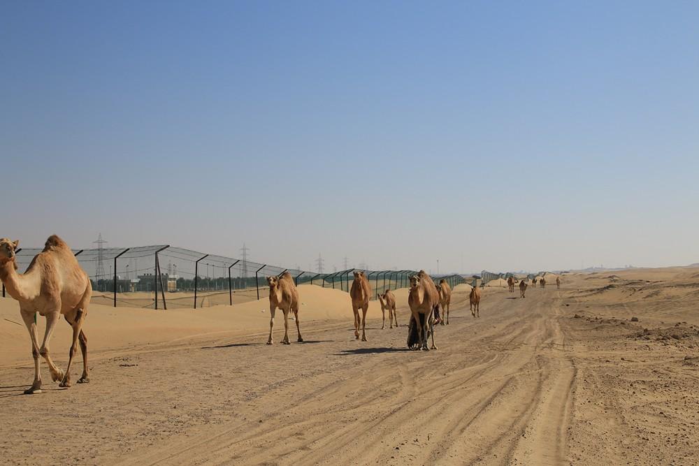 UAE_082