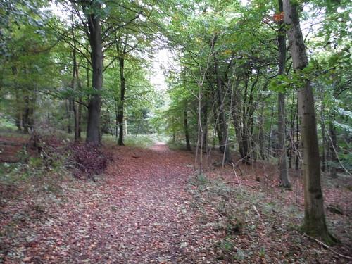 QE Country Park - Ascent through QE Forest