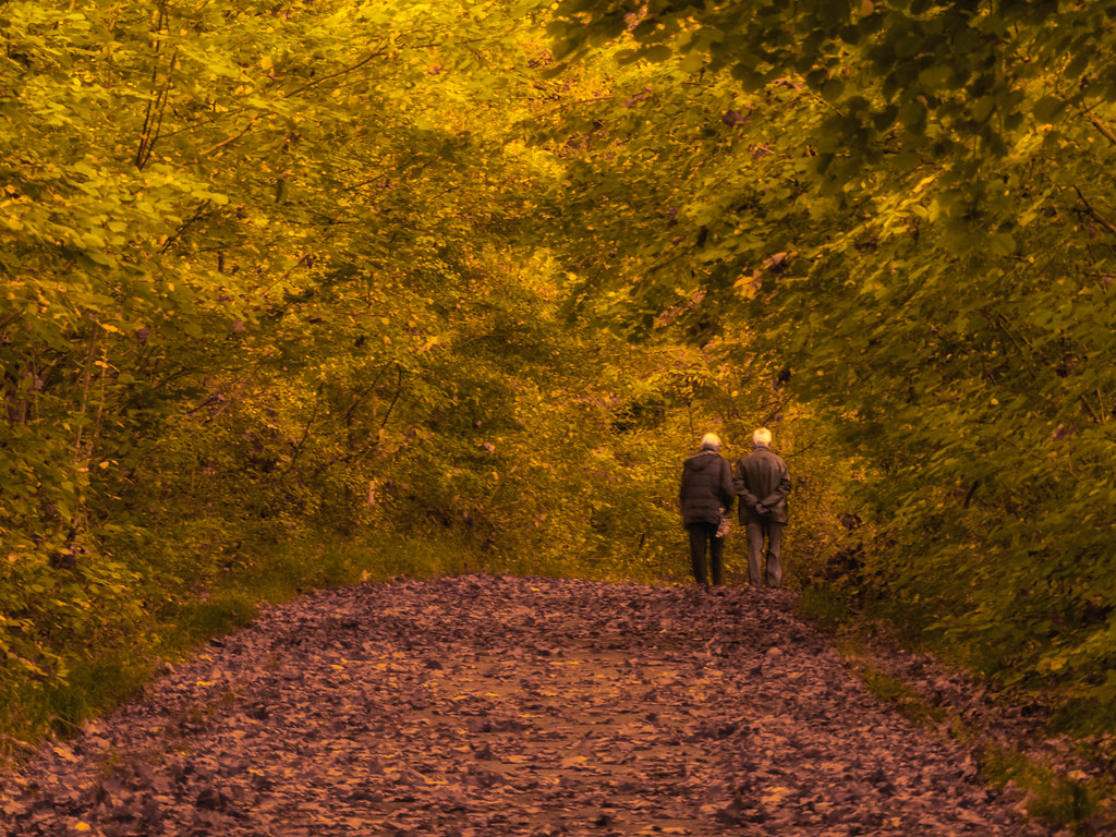 L'automne d'une vie... 36997850074_f34c59e5f6_b