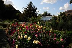 Garden at Walmer castle
