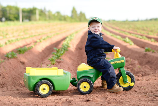 Farmer Owen Checking his Potato Crop