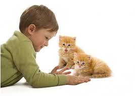interaksi dengan hewan