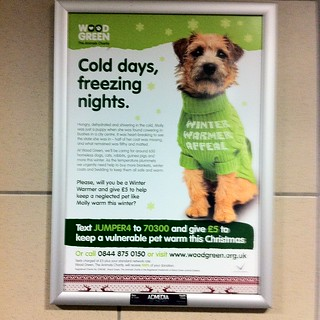 Cold days, freezing nights - charity poster