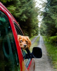 I'm bored already, can someone tell me where we're going? Please? • • • • • #hikingwithdogs #campingwithdogs #adventuredog #dogsthathike #dogsonadventures #puppylove #backcountrypaws #puppiesofinstagram #traildog #ruffwear #adventurewithdogs #hikingdogsof