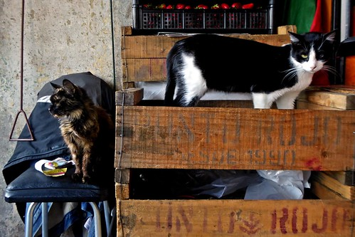 Gatos en la Vega - Santiago, Chile