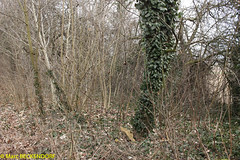 2017-02-26-11-24-29_Colline de Hausbergen.jpg